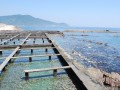 abalone gathering happens here