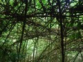 lovely bamboo forest