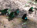 some of the many butterflies we saw