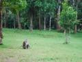 monkeys near our campsite!
