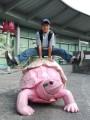 acrobatics! pink tortoise!