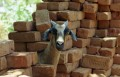 goat with bricks