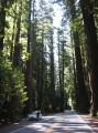 rtm redwoods