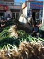 many, many green onions