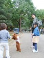 people train their dogs to walk on their hind legs. good laugh