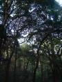 memorial park to emperor meiji and empress shoken