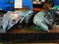 gigantic tuna heads