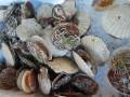 shellfishies