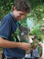 koalas sleep insane amounts and eat for the rest