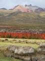 volcan tunupa y quinoa rojos