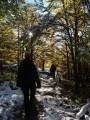 through beautiful woods