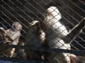 sad monkeys