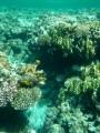 reef!