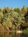 palms of the nile