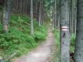 mah trail